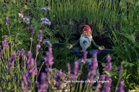 gnome meditating in lush garden